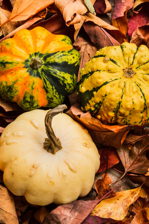 feast: Gourds on Autumn leaves on the ground