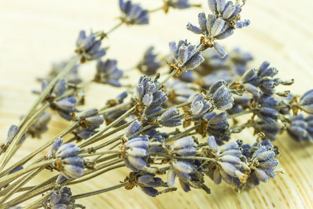 Dried lavender flowers