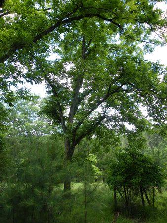 Gorgeous trees