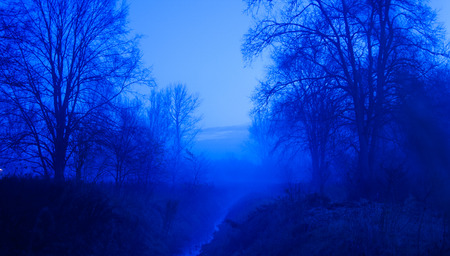 Blue Foggy Forest