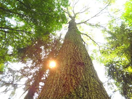 午後のツリー 写真素材