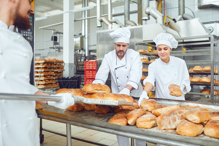 Bakers put fresh bread on trays in the bakery.