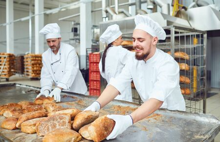 Bakers working together at baking manufacture.