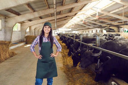 Portrait of a happy smiling female farm worker standing holding hands on belt near row of buffaloes and looking at camera. Concept of a successful agricultural business and increase dairy production. Standard-Bild