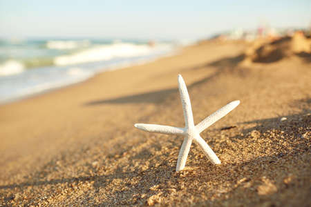 Close-up of white starfish on sandy beach with blue sea water waves at background on summer clear sunny day, selective focus. Foto de archivo