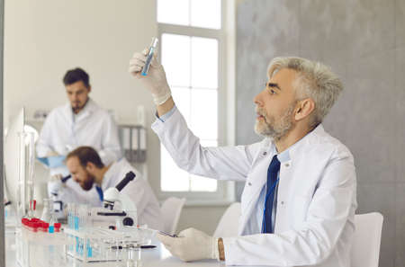 Serious researcher in white coat and gloves working in medical laboratory. Portrait of experienced senior white-haired scientist sitting at lab table and looking at glass tube hes holding in hand Standard-Bild