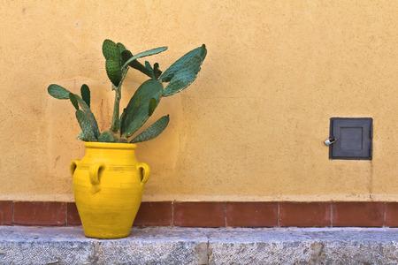 adobe wall: Cactus di fronte a un muro di adobe Archivio Fotografico
