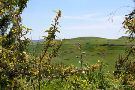 green meadows: Green meadows in Sicily