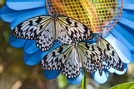 Close-up of a colorful and beautiful butterfly