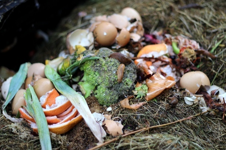 Compost - a natural fertilizer and ecological use of kitchen waste photo