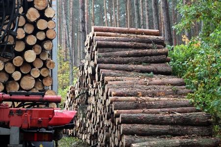haulage: Haulage timber