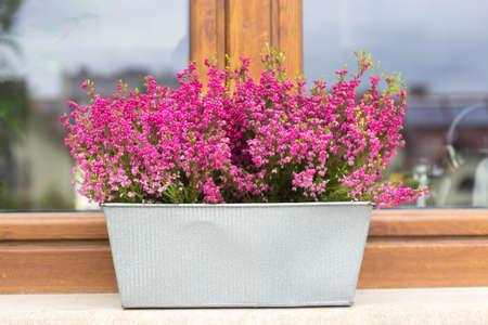 heather flowers in a zinc pot on the windowsill autumn window decoration