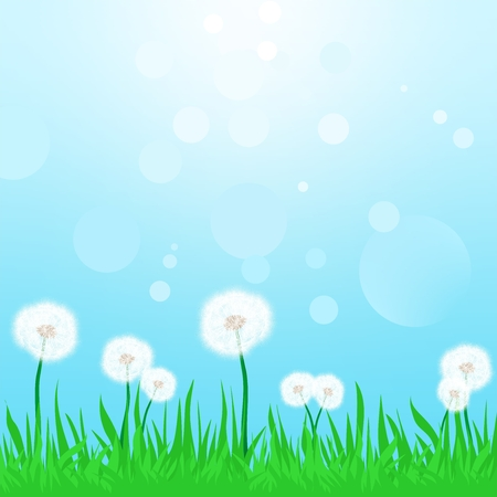 turf flowers: Spring landscape with green grass with flowering dandelions with the blue sky and sun reflections