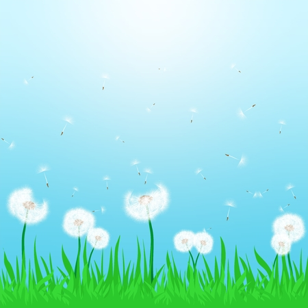 blown: Spring landscape with flowering white dandelion being blown in the wind with green grass and sun shine with a blue sky
