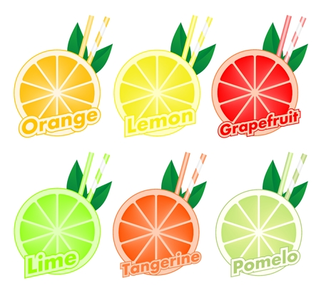 Colorful set of cut slices of citrus fruits with colorful two straws and green leaf of orange, lime, grapefruit, tangerine, lemon and pomelo. Mixed fresh health fruit. Illustration