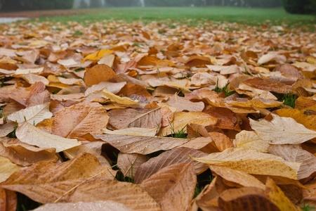 idyll: Autumn idyll