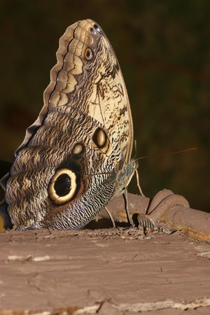 morphing: butterfly