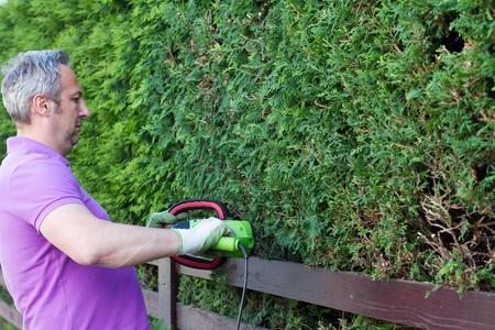 hedge clippers: Man trimming hedge
