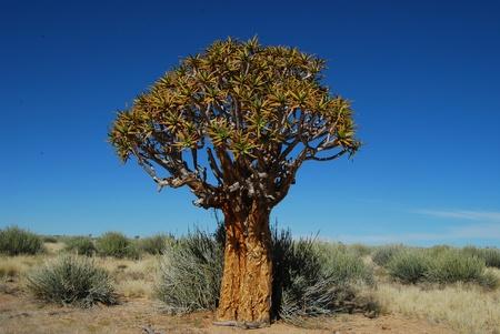 Desert tree  Stock Photo - 8947306