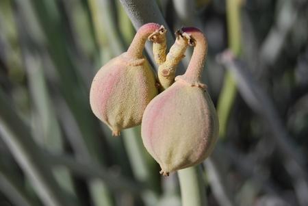 bottons: Bottons of a flower