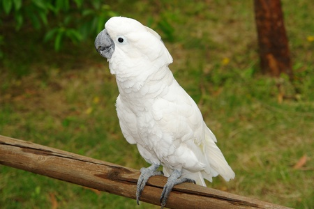 cockatoo Stock Photo