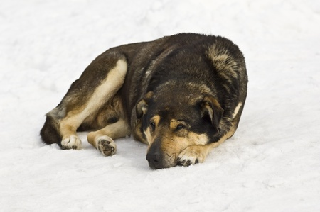 Dog laying on a snow and sleeping Stock Photo