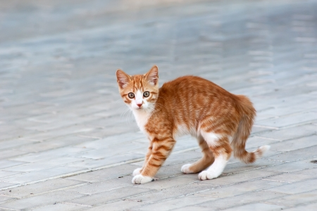Red little kitten play on road on sunny day on summer
