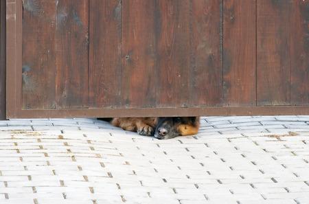 perro furioso: Perro enojado buscando Foto de archivo