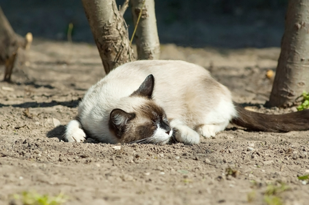 Funny cat on ground photo