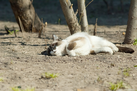 Sunbath cat lying on ground photo