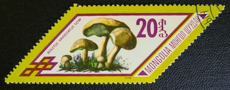 estampilla: MOSCOW, RUSSIA - JANUARY 7, 2017: A stamp printed in Mongolia shows Boletus variegatus sow mushrooms, series, circa 1978 Editorial