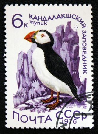 estampilla: MOSCOW, RUSSIA - JANUARY 7, 2017: A stamp printed in the USSR shows bird Atlantic Puffin - Fratercula arctica, circa 1976 Stock Photo