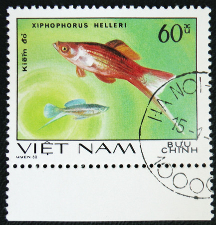 old envelope: MOSCOW, RUSSIA - JANUARY 7, 2017: A stamp printed by Vietnam shows fish Xiphophorus helleri, stamp is from the series, circa 1980