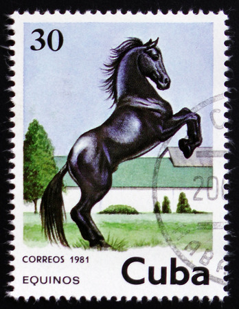 MOSCOW, RUSSIA - FEBRUARY 12, 2017: A stamp printed in Cuba shows black horse jumping on a place and village scene on its background, circa 1981