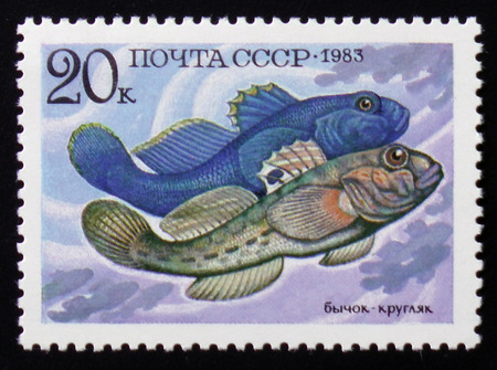MOSCOW, RUSSIA - FEBRUARY 12, 2017: A stamp printed in the USSR shows marine fish, Neogobius melanostomus, from the series