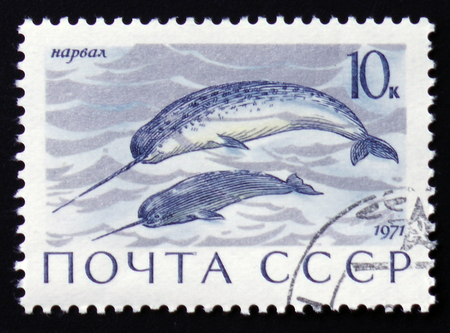 MOSCOW, RUSSIA - FEBRUARY 12, 2017: a post stamp printed in the USSR shows Enhydra lutris animal, the series
