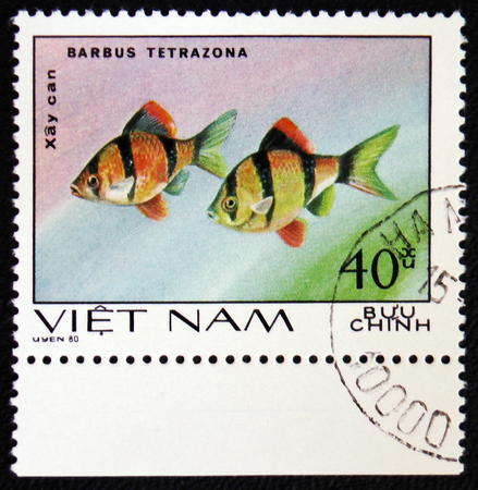 tetrazona: MOSCOW, RUSSIA - JANUARY 7, 2017: A stamp printed in Vietnam, shows fishes Barbus Tetrazona, Ornamental Fish, circa 1980