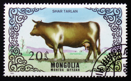 old envelope: MOSCOW, RUSSIA - FEBRUARY 12, 2017: A stamp printed in Mongolia shows a cow breed Shar Tarlan, a series devoted to cattle, circa 1985