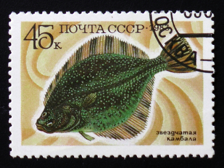old envelope: MOSCOW, RUSSIA - FEBRUARY 12, 2017: A stamp printed by USSR, shows Starry Flounder fish or Platichthys stellatus, circa 1983