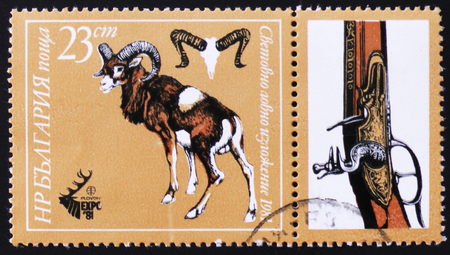 estampilla: MOSCOW, RUSSIA - FEBRUARY 12, 2017: A stamp printed by Bulgaria shows Mouflon or ram, Plovdiv, EXPO 81, circa 1981 Stock Photo