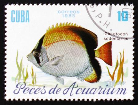 MOSCÚ, RUSIA - 12 DE FEBRERO DE 2017: Un sello impreso en Cuba muestra un pescado con la inscripción