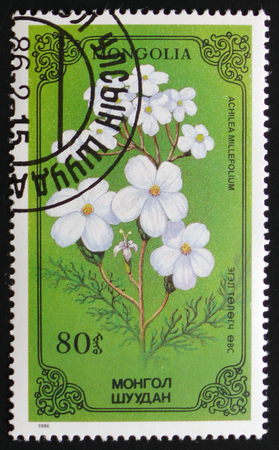 millefolium: MOSCOW, RUSSIA - FEBRUARY 19, 2017: A stamp printed in Mongolia shows Achilea millefolium or thousand-leaf, series devoted to flowers, circa 1986