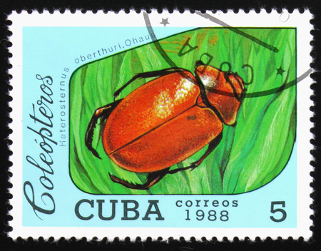 MOSCOW, RUSSIA - FEBRUARY 19, 2017: A stamp printed by Cuba shows Beetle Heterosternus oberthuri. Ohausi, series beetle, circa 1988