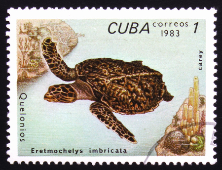 estampilla: MOSCOW, RUSSIA - FEBRUARY 19, 2017: A stamp printed in Cuba shows Eretmochelys Imbricata, series devoted to turtles, circa 1983