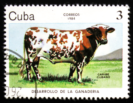 MOSCOW, RUSSIA - FEBRUARY 19, 2017: A post stamp printed in CUBA shows a Caribe Cubano cow,  circa 1984