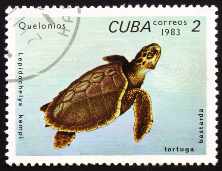 A stamp printed in Cuba shows turtle Olive Ridley with the inscription
