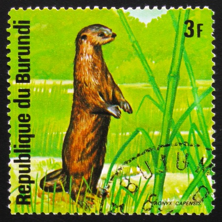 MOSCOW, RUSSIA - FEBRUARY 19, 2017: A stamp printed by Burundi shows  African clawless otter (Aonyx capensis), series Animals Burundi, circa 1975 Editorial