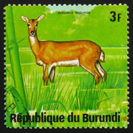 MOSCOW, RUSSIA - FEBRUARY 19, 2017: A stamp printed by Burundi shows antelope bohor reedbuck (Redunca redunca), series Animals Burundi, circa 1975