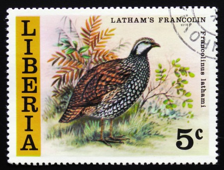 estampilla: MOSCOW, RUSSIA - FEBRUARY 19, 2017: MOSCOW, RUSSIA - FEBRUARY 19, 2017: A stamp printed in Liberia shows Latham`s francolin (Francolinus lathami), circa 1977