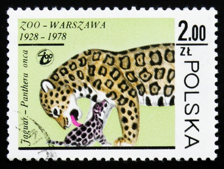 MOSCOW, RUSSIA - FEBRUARY 19, 2017: A stamp printed in Poland shows Jaguar (Panthera onca), circa 1978